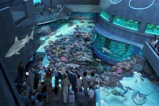 National Aquarium S Por Community Program Fridays After Five Returns On Friday September 6 Every Evening Through March 28